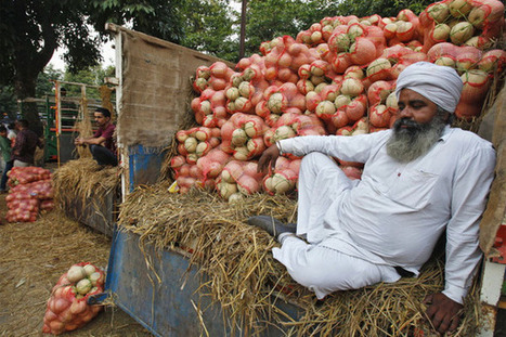 Organic farming continues to rise across the globe | sustainablity | Scoop.it