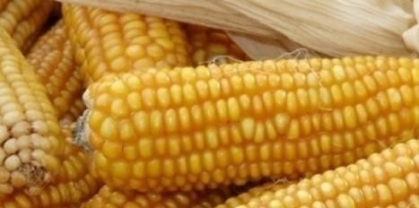 OGM : le comité de l'ombre de l'Académie des sciences   Ma revue du Web   Scoop.it