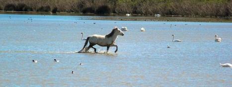 Restaurer les zones humides n'a pas de sens. Il faut les protéger! | Infogreen | Le flux d'Infogreen.lu | Scoop.it