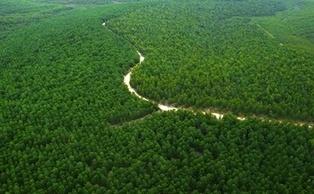 BusinessGreen Zero Deforestation Challenge   Responsible supply chains   Scoop.it