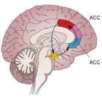 Un mécanisme liant la douleur chronique et l'anxiété ouvre la voie à ... - PsychoMédia | Accompagnement mieux-être | Scoop.it