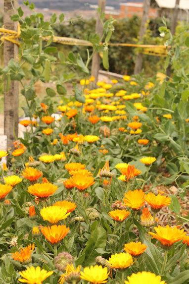 La agricultura urbana se fortalece cada día en Bogotá | Ambiente | Scoop.it