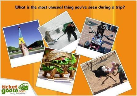 23: What is the most unusual thing you have seen during a trip? - TicketGoose | Online Bus Tickets Services | Scoop.it