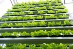 Sky Green Singapore – the World's First Commercial Vertical Farm | Sustain Our Earth | Scoop.it