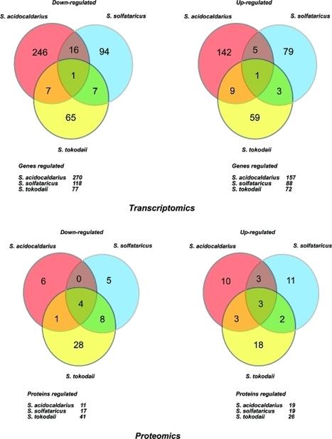 Macromolecular fingerprinting of sulfolobus s... [J Proteome Res. 2011] - PubMed - NCBI | Publications-Albers lab | Scoop.it