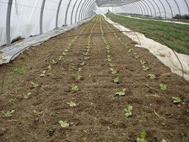 Organic Gardening: Sustainable Organic Vegetable Gardening With Organic Matter | Organic Gardening Blog | Scoop.it