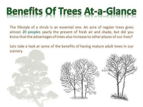 Benefits Of Trees At-a-Glance | tree services | Scoop.it