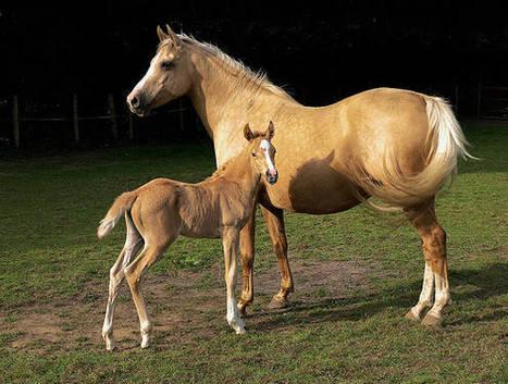 Rainbo Rock Ranch Large Animal Rescue | Animal Rescue Web Digest | Scoop.it
