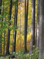 Journée Technique Forêt et Biodiversité en 2013 : les exposés en téléchargement | Mes passions natures | Scoop.it