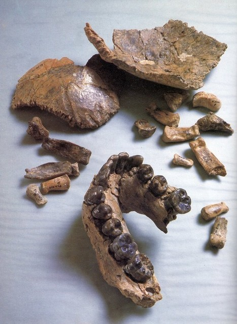 This jawbone may change everything we know about early human history   JWK World History   Scoop.it