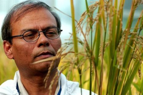 Golden rice and the struggle over genetically modified food   Year 10 Biology - Genetics   Scoop.it