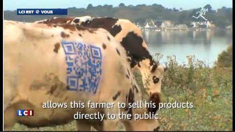 LCI - Des QR codes sur les vaches : Quand la fiction devient réalité | QRdressCode | Scoop.it