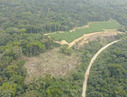 Scientists say massive palm oil plantation will   Wildlife and Environmental Conservation   Scoop.it