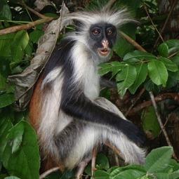 Les 10 espèces africaines les plus menacées | Ecology view | Scoop.it