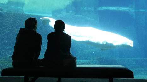 Vancouver park board bans aquarium from breeding whales and dolphins | All about water, the oceans, environmental issues | Scoop.it