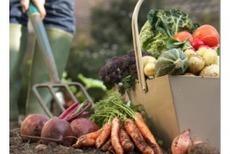 Agriculture bio: surfaces et ventes en hausse, mais moins de conversions   Agriculture en Gironde   Scoop.it