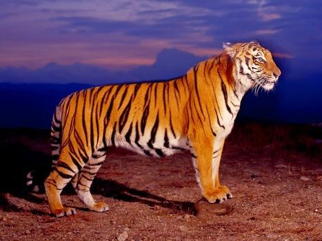 Ranthambore National Park Safari Tours: Plan a Ranthambore National Park Safari Tours   Safaris in India & Africa   Scoop.it