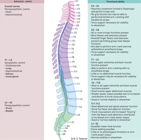 Neuroxcel Inc | Spinal Cord Injury | Basic Facts | Program Levels | `Great Post about :Spinal Cord Injury Levels | Scoop.it