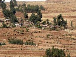 Eucalypt in Ethiopian highlands: Increasing productivity of important tree | #TreeNews | Scoop.it