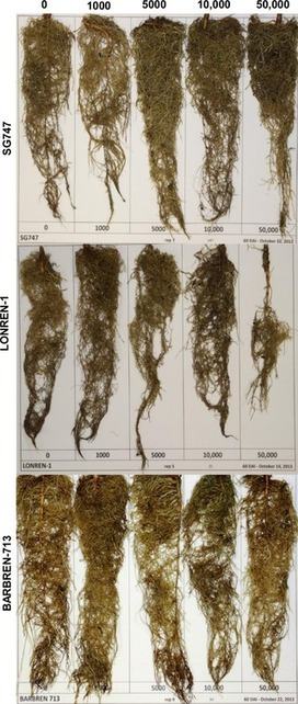 Transcriptome Analysis of Cotton (Gossypium hirsutum L.) Genotypes That Are Susceptible, Resistant, and Hypersensitive to Reniform Nematode (Rotylenchulus reniformis) | PlantBioInnovation | Scoop.it