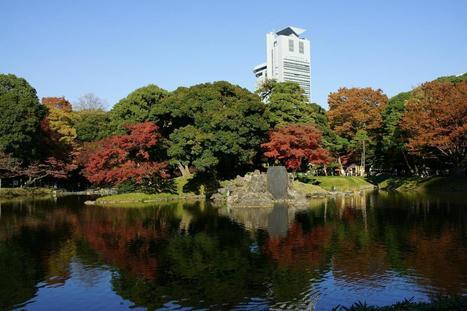 Autumn leaves in Koishikawa Korakuen garden - Ambassadors Japan | Japanese Gardens | Scoop.it