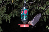 EcoHearth - Natural Garden Pest Control, Part 3: Insects, Worms, Birds, Bats and Other Beneficial Organisms | 100 Acre Wood | Scoop.it