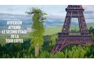 One Heart One Tree - L'art numérique et écologique de Naziha Mestaoui | 1 Heart 1 Tree - COP21 | Scoop.it
