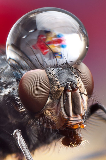 Incredible Macro Photos of Insects with Drops of Water On Their Heads | It should have been me to take that photography | Scoop.it