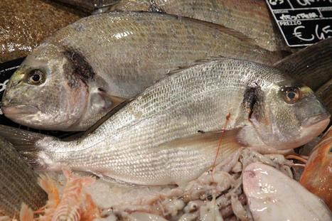 WORLDWIDE: European Seabass and Gilthead Seabream - March 2015 | Aquaculture and Fisheries - World Briefing | Scoop.it
