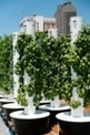 Rouses Markets Creates Sustainable Aeroponic Rooftop Garden Above Downtown New Orleans Store - US Politics Today | Vertical Farm - Food Factory | Scoop.it