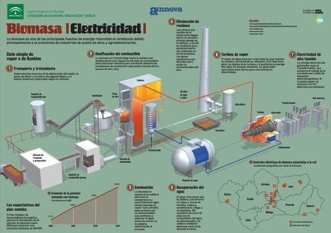 Curiosidades sobre la biomasa como fuente de energía renovable | Renewable Energy | Scoop.it
