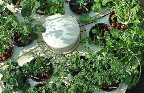 How to start your own hydroponic garden   Landscape and Garden Design   Scoop.it