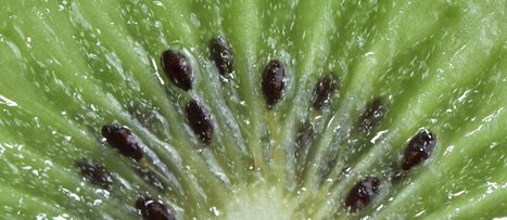 Two Kiwifruit an Hour Before Bedtime | NutritionFacts.org | Plant Based Nutrition | Scoop.it