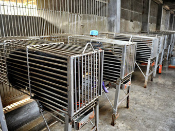 Pro-Animals: Brutalitat camuflada | Notícies d'actualitat | Scoop.it