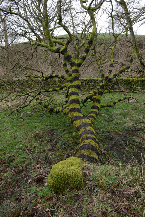 Andy Goldsworthy: Natural Man | Architectural Digest | The Arts and Sustainability | Scoop.it