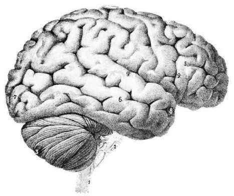 Researchers at Duke have made breakthrough on Alzheimer's treatment | Social Neuroscience Advances | Scoop.it