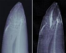 'Dark field' X-rays reveal bodies in new detail - tech - 21 January 2008 - New Scientist | x-ray technician Aspect 2 | Scoop.it