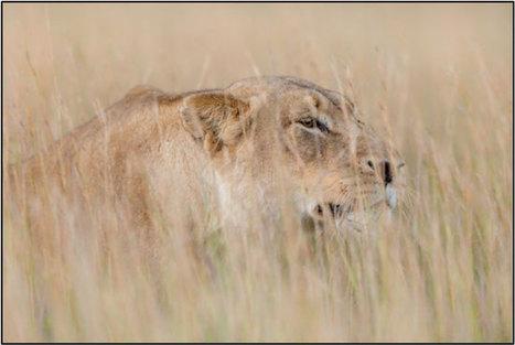 Kariega Game Reserve photographic safari - Africa Geographic Blog | GarryRogers NatCon News | Scoop.it