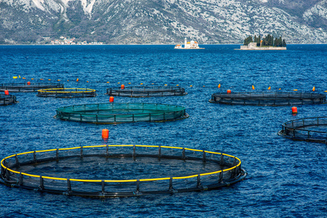 "Fish Farming: Do the Pros Outweigh the Cons? (""improvements are needed to ensure consumers"") 