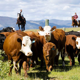 U.S. Ranchers Struggle to Adapt to Climate Change: Scientific American | Sustain Our Earth | Scoop.it