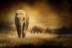 Tanzania Wants to Use UAS in Anti-Poaching Ops - i-HLS | Poaching & Wildlife Crime | Scoop.it