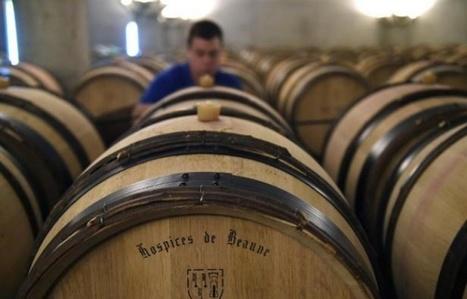 Vin et spiritueux: Cinq nouvelles qui vont (peut-être) vous surprendre   Le Cognac et son vignoble   Scoop.it