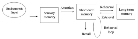 Atkinson and Shiffrin   Multi Store Model of Memory   Simply Psychology   AQA A Psychology   Scoop.it