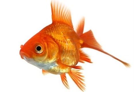 Primo d'aprile, da dove viene il pesce d'aprile? | Italica | Scoop.it