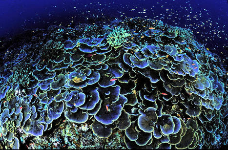 Stop overfishing and coral reefs will rebound quickly (but we'll need to fix that climate problem) | Brian Palmer | onEarth.org | Coral reef ecosystems resilience | Scoop.it