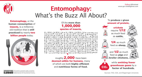 Entomophagy: What's the Buzz All About? | Entomophagy: Edible Insects and the Future of Food | Scoop.it