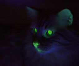Where cats glow green: weird feline science in New Orleans - The Verge | Animal Abuse | Scoop.it