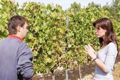 Le millésime 2013 s'annonce délicat   Agriculture en Dordogne   Scoop.it