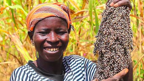 Foire des Innovations Paysannes de l'Afrique de l'Ouest | Questions de développement ... | Scoop.it