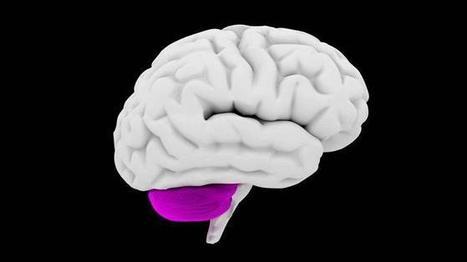 Tutkijat ällistyivät: Nainen on elänyt 24 vuotta ilman pikkuaivoja | Psykologia 3 | Scoop.it